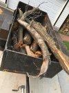 Logs red locust and sugar maple I 30JUL2021 550px.jpg